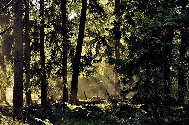 vacanza nella natura in goteborg svezia
