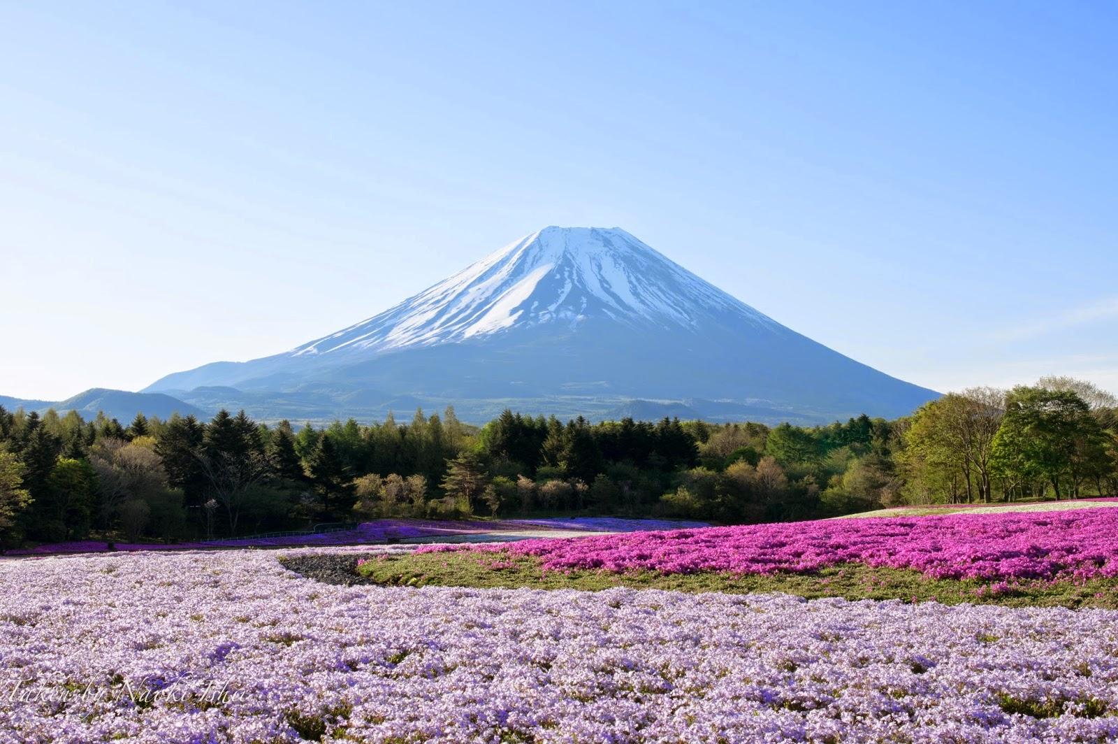Este in fiore torna nel fine settimana del e aprile