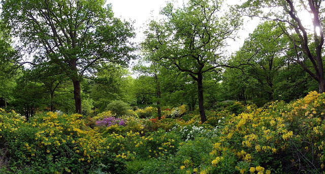 Parco di slottsskogen a göteborg, svezia