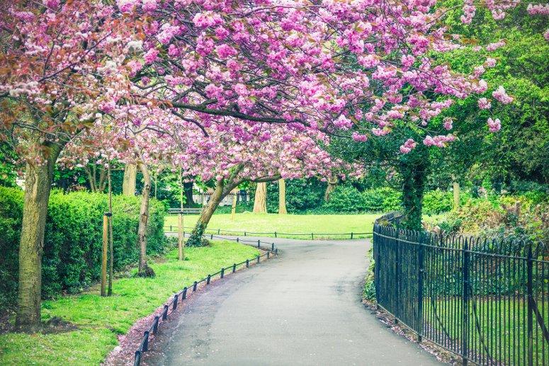 Il parco Saint Stephen's a Dublino.