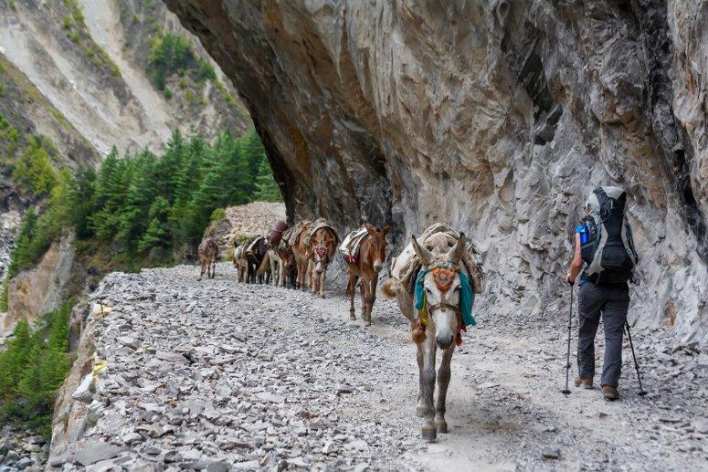 Il trekking è tra le attività più richieste dai turisti in Nepal.